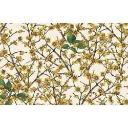Papier Tassotti do decoupage 50x70 cm - Calycanthus