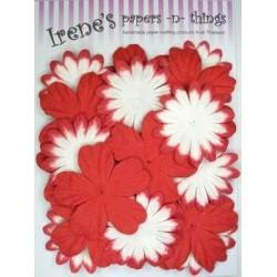 Zestaw papierowych kwiatków (20 szt.) czerwone z białym