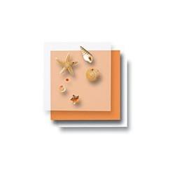 Zestaw elementów do dekorowania - rozgwiazdy i muszelki