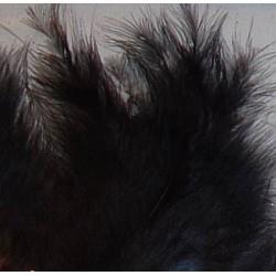 Kolorowe piórka czarne