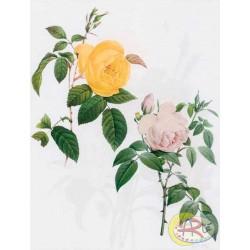 Kalkomania Arte - Żółta i różowa róża