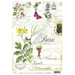 Papier do decoupage ITD SOFT 008 - Zioła jaskółcze ziele