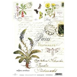 Papier do decoupage ITD SOFT 012 - Zioła wulfenia