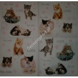 Serwetki do decoupage - małe kotki