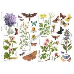 Papier do decoupage ITD SOFT A3 023 - Zioła i motyle