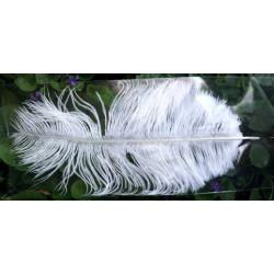 Pióro strusie naturalne białe