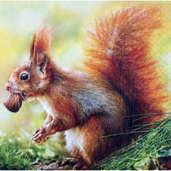 Serwetki do decoupage - wiewiórka