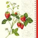 Owoce i rośliny